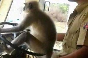 VIDEO: Khỉ lái xe buýt khiến hành khách kinh hãi