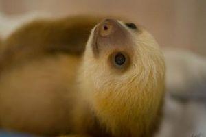 Những loài động vật cực đáng yêu nhưng kỳ quái nhất trên đời