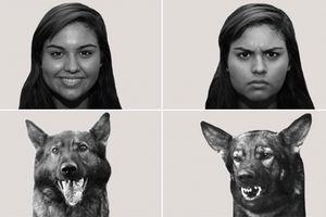 Loài chó có thể đọc được biểu cảm của chủ như thế nào?