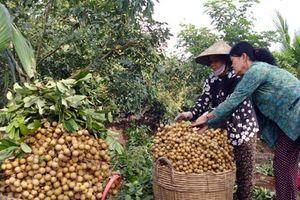 Xuất khẩu sang Mỹ, nông sản Việt đối mặt nhiều rào cản