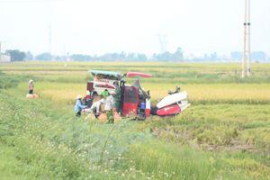 Nghệ An: Giải quyết tranh chấp dịch vụ máy gặt, 2 cán bộ xã đánh nhau
