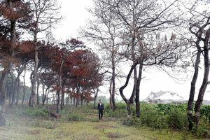 Cấp đất rừng lấn chiếm ở Gia Lai, nữ cán bộ đất đai bị khởi tố