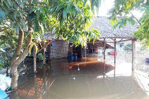 Cận cảnh nhiều nơi ở ĐBSCL chìm trong nước do triều cường làm vỡ đê bao