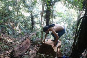 Cách chức Đội trưởng Bảo vệ rừng để lâm tặc lộng hành