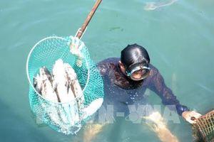 Huyện Bình Sơn, Quảng Ngãi phản hồi về nguyên nhân cá bớp chết hàng loạt