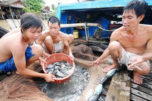 An Giang bảo vệ nguồn lợi thủy sản