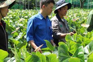 Vùng đất trồng hoa hồng môn cứ 1 sào lời 100 triệu đồng