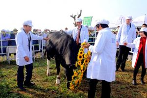 Những điều đặc biệt ở trang trại bò sữa hữu cơ TH true MILK