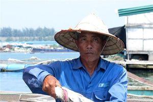 Xác định nguyên nhân cá bớp chết hàng loạt tại Quảng Ngãi