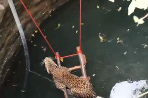 Giải cứu báo đốm rơi xuống giếng sâu gần 10 mét ở Ấn Độ