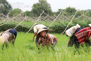 Nông dân không nên chạy theo nông nghiệp 4.0 bằng mọi cách