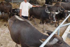 Đồng Tháp: Nhộn nhịp chợ phiên trâu bò biên giới Tân Hồng