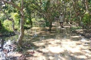 Triều cường bất thường gây thiệt hại nặng tại Vĩnh Long và Đồng Tháp