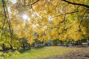 Sắc mầu 'mùa thu vàng' ở Moscow