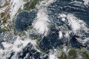 Bão Michael 'khổng lồ' chuẩn bị đổ bộ vào Florida, Mỹ