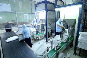 Mỗi năm Việt Nam đóng góp gần 6 triệu tấn gạo vào 'nồi cơm' thế giới