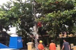 Trèo cột sửa điện, công nhân điện lực bị giật tử vong