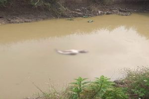 Hà Nội: Bàng hoàng phát hiện thi thể người đàn ông khỏa thân, đang phân hủy dưới mương nước