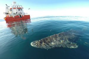 Sức hút nào ở cáp quang biển khiến cá mập thích cắn?
