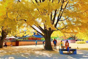 #Mytour: Trải nghiệm mùa thu Hàn Quốc đẹp như tranh của cô gái Việt