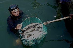 Cá chết hàng loạt, người dân yêu cầu dừng nạo vét luồng lạch cảng