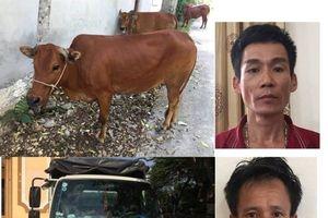 Trộm bò tại Quảng Bình rồi dùng ôtô chở ra Hà Tĩnh tiêu thụ
