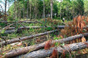 Nhậu xong, nhóm đối tượng tấn công chốt bảo vệ rừng, cướp tài sản