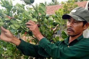 Tỷ phú trồng 9ha cây ăn quả và 70ha rừng trên vùng đất cằn