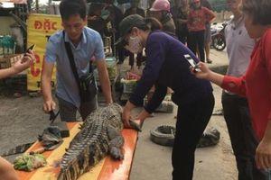 Nghệ An: Chích điện xẻ thịt cá sấu bán bên đường gây phản cảm