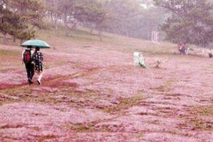 Phiêu bồng cùng mùa hội cỏ hồng trên cao nguyên Lang Biang