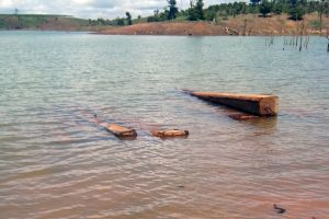 Khai thác cát, bất ngờ phát hiện hơn 50 khối gỗ sao đen dưới lòng sông