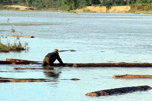 Phát hiện lượng lớn gỗ sao đen dưới sông khi khai thác cát
