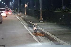 Khoảnh khắc chú chó cố gắng gọi bạn dậy sau tai nạn khiến nhiều người suy ngẫm