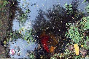 Tá hỏa phát hiện 2 thi thể nam giới dưới mương nước