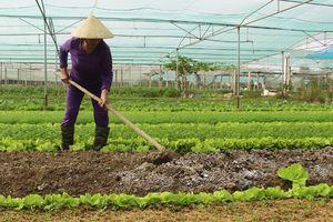Toàn tỉnh có 27 doanh nghiệp, HTX tham gia sản xuất, kinh doanh chuỗi cung ứng thực phẩm an toàn