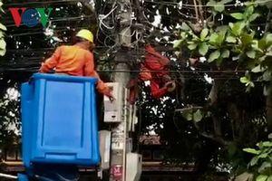 Công nhân điện lực tử vong khi đang xử lý sự cố điện