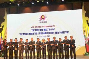 Hợp tác nông lâm nghiệp luôn là nội dung then chốt của Cộng đồng Kinh tế ASEAN
