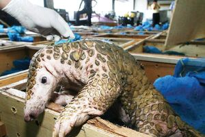 Châu Á trong cuộc chiến bảo vệ động vật hoang dã