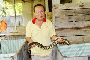 'Lạ mắt' mô hình nuôi rắn ri voi trong thùng gỗ