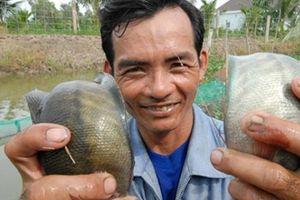 Lũ ở miền Tây: Mùa cá tôm về theo con nước