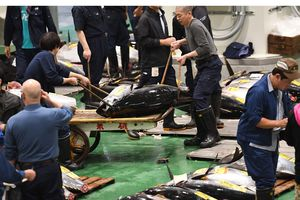 Chợ cá lớn nhất thế giới mở lại