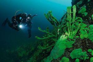 Những bí ẩn xung quanh Baikal- Hồ nước ngọt sâu nhất hành tinh