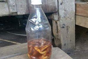 Vụ 2 cậu cháu tử vong sau khi uống rượu ngâm rễ cây: Có độc tố từ cây lá ngón