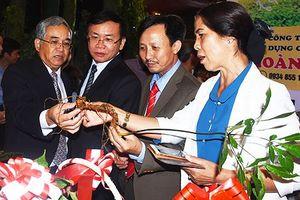 Bảo tồn, phát triển sâm Ngọc Linh gắn với công tác quản lý bảo vệ rừng