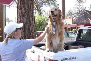 Mỹ: Chú chó Max đáng yêu trở thành thị trưởng