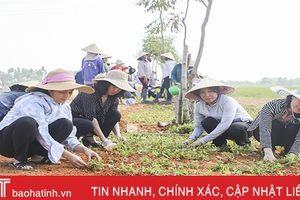 Gần 200 hội viên phụ nữ giúp người dân Gia Hanh xây dựng nông thôn mới