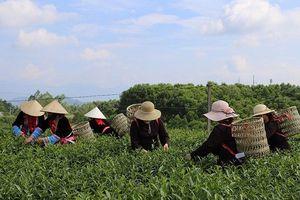Sản xuất nông nghiệp an toàn phải từ ý thức người nông dân