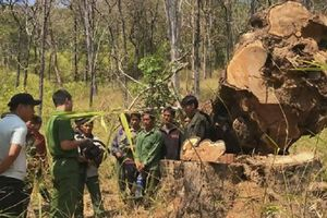 Vườn quốc gia Yok Đôn bị tàn phá: Truy tố 15 nghi can