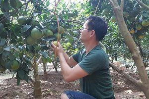 Bón DAP Đình Vũ cho cây ăn quả
