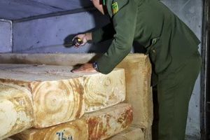 Bắt vụ vận chuyển trái phép gỗ Pơ Mu trên quốc lộ 27C
